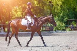 Sport - Sales $18,500 pw - Dressage - Horses - Equestrian Centre - Riding School
