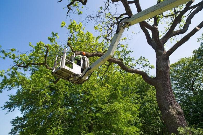 tree-services-western-suburbs-business-for-sale-9029-3