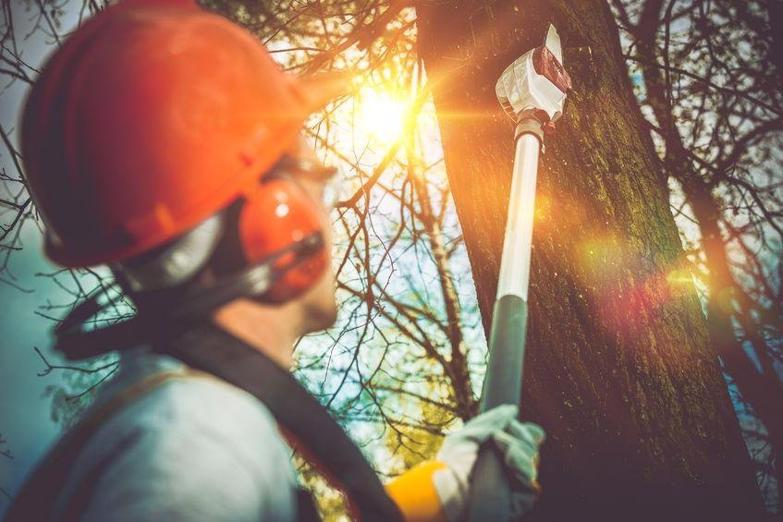 tree-services-western-suburbs-business-for-sale-9029-1