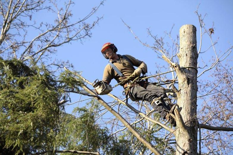 tree-services-western-suburbs-business-for-sale-9029-0