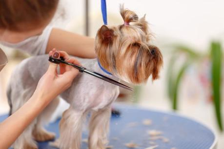 Staff Managed & Highly Frequented Pet Grooming Salon and Doggy Day Care Service