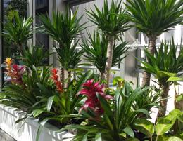 PLANTS HIRE AND LANDSCAPE BUSINESS GOLD COAST QUEENSLAND