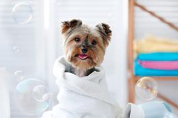 18119 Dog Grooming, Pet Minding and Dog Walking Business