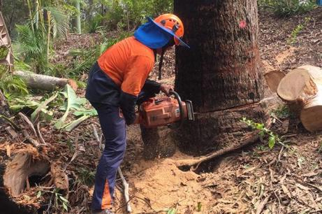 Arborist Required - S.E. Queensland