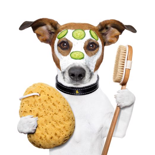 pet-grooming-doggy-daycare-in-wagga-great-diversified-established-business-1