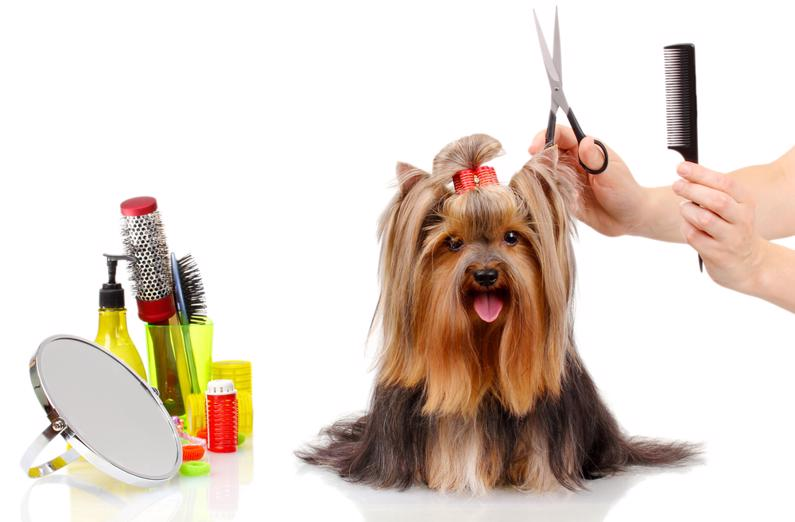 pet-grooming-doggy-daycare-in-wagga-great-diversified-established-business-3