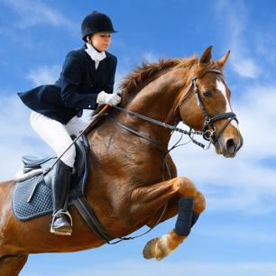 Saddlery & Equestrian Supplies - Priced to Sell!