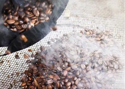 Coffee Roasting and Wholesaler For Sale Sydney