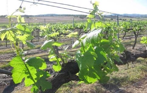 Lifestyle, Income, Great Location - Award Winning Vineyard For SALE