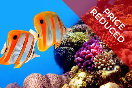 Profitable fish and aquarium business (Perth)