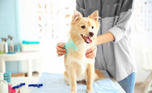 Up market Dog Grooming and pet shop for sale