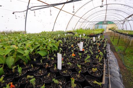 Wholesale Horticultural Propagation Supplier