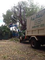 Tree service business