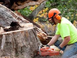 High-Quality Tree Management Company - $695,000 (15346)