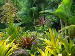 Melbourne's Largest Tropical Nursery (Freehold) Wholesale business, Turnover $61