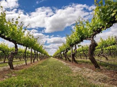 Winery and Land For Sale - only $770,000 (15162)