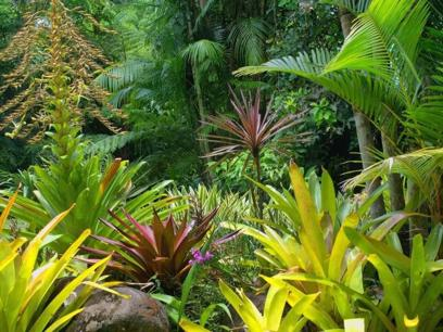 Melbourne's Largest Tropical Nursery (Freehold) Wholesale business - Turnover $6