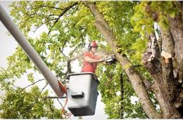 Thriving And Profitable Provider Of Tree Care Services Business For Sale - QLD
