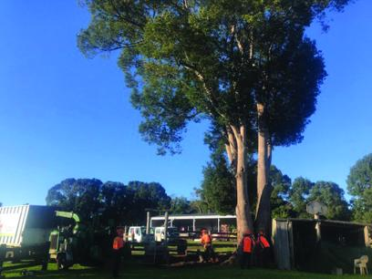 Established Tree Felling and Landscaping Business  Alstonville, NSW