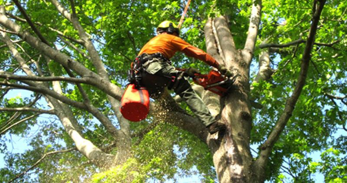 Central Coast Tree Services - $750K of equipment assets included