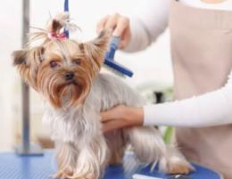 Successful Dog Grooming Business