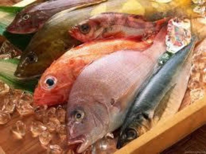 fresh-fish-store-in-the-east-ref-16628-1