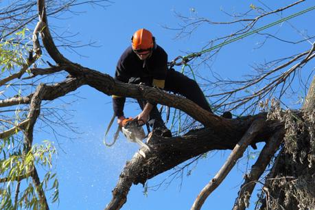 one-of-melbournes-most-established-tree-maintenance-businesses-for-sale-0