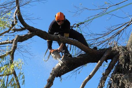 One of Melbourne's most established Tree maintenance businesses for sale.